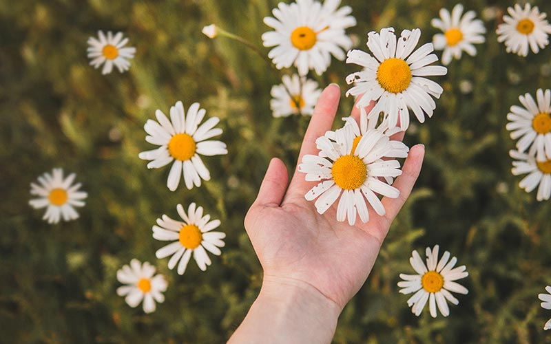 Woman holding a daisy in a field of grass.